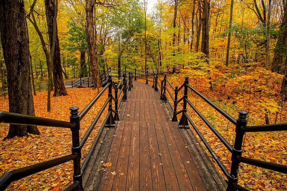 canada-fall-autumn-leaves